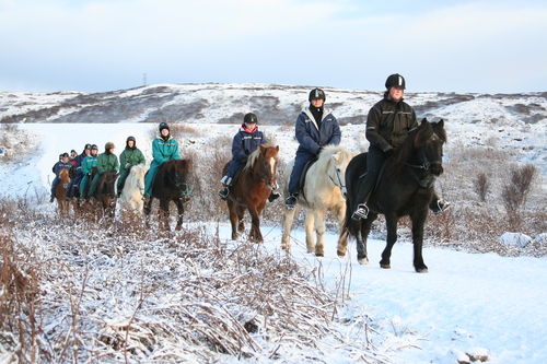 Private Icelandic Horse Riding Tour