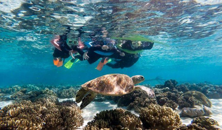 Ocean-safari-redo-1