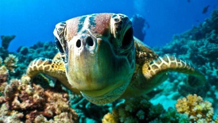 coral-reef-diving-australia