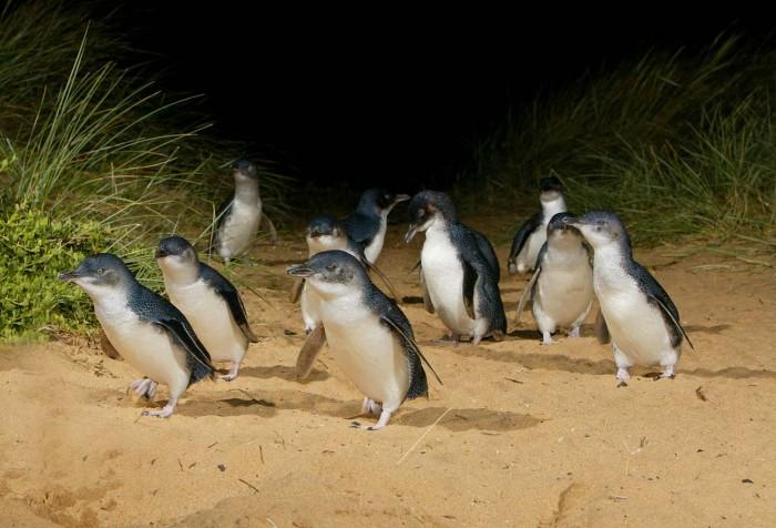 penguin-watching