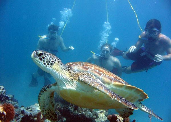 turtle-reef-tour