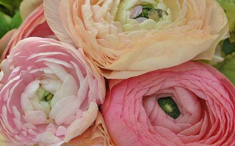 The 10 Most Expensive Flowers In The World