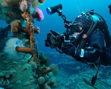 Dive Into Canada's Best Underwater Attractions