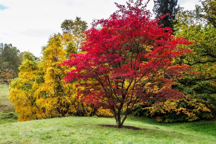 10 Types Of Trees You Ll Find In Affluent Areas