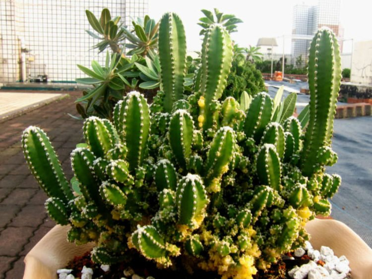 The Five Most Expensive Types of Cactus in the World