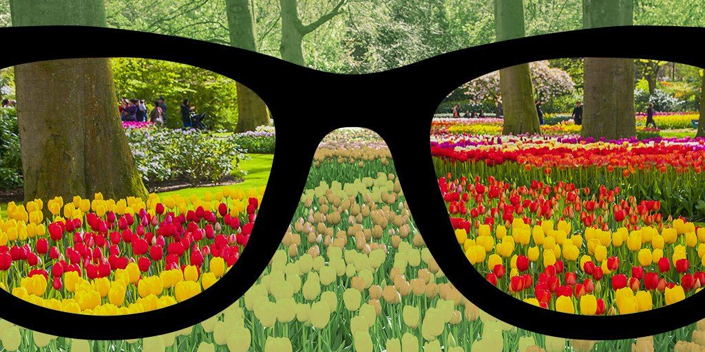 10 Things You Didn T Know About Enchroma Glasses