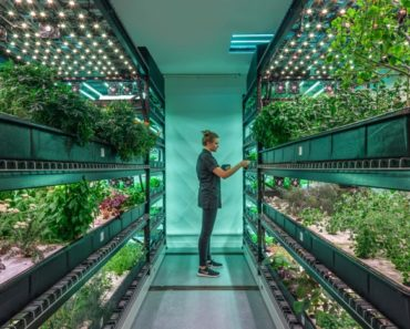 Why The Future of Farming Will Take Place Indoors