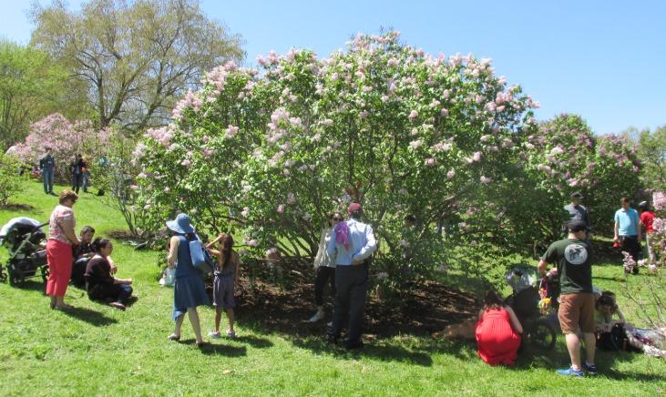 Arnold Arboretum in Jamaica Plain