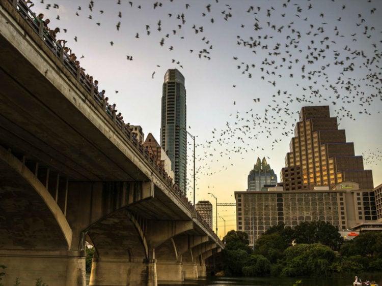History of Congress Avenue Bridge Bats in Austin