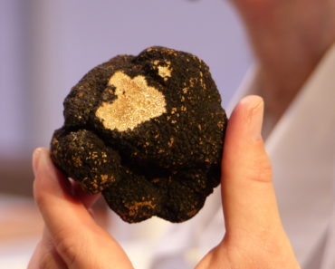 Why are Truffles so Expensive? Here's the Answer