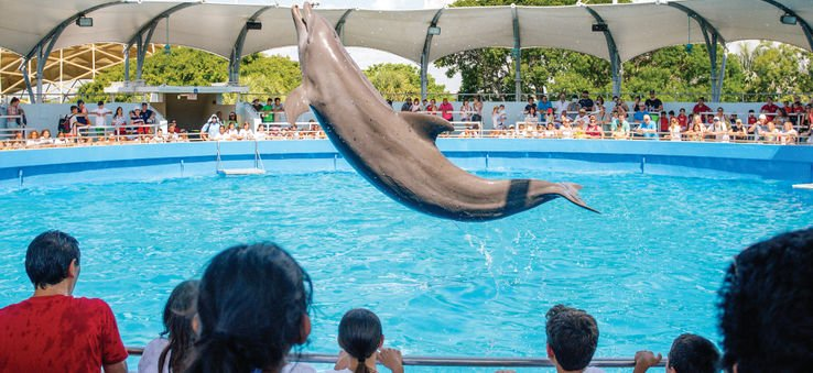he Miami Sea Aquarium