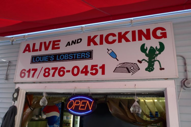 Alive and Kicking Lobsters