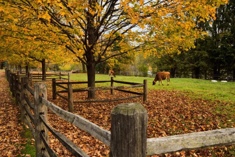 BIllings Farm
