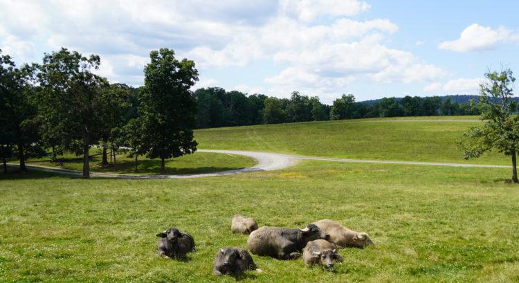 Lake Tobias Wildlife Park