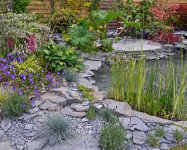 The Bog Garden at Benjamin Park