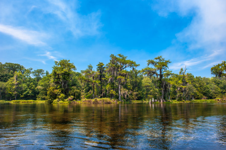Tallahassee River Sinks