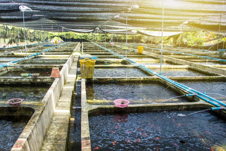 Bow Habitat Station and Sam Livingston Fish Hatchery