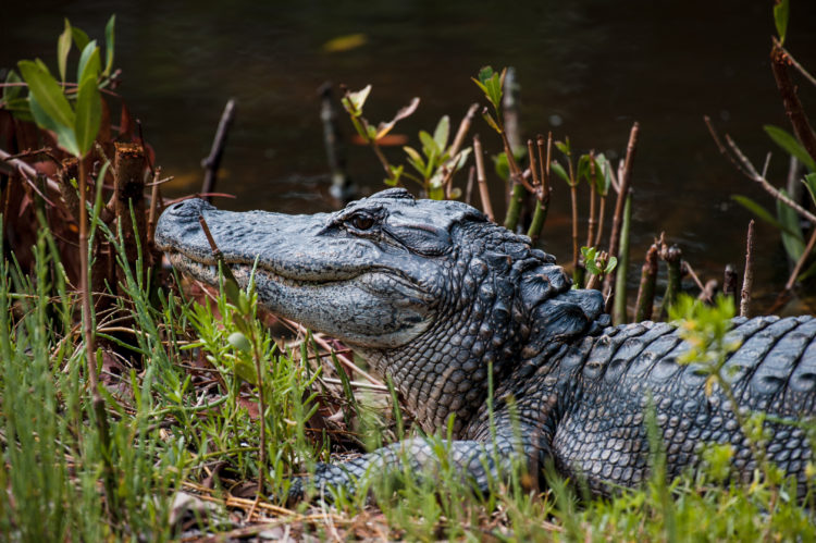 Natural Environment at The Conservancy of Southwest Florida