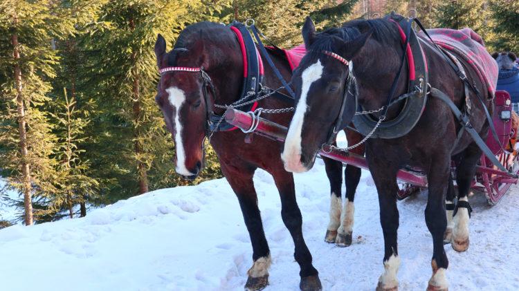Alpine Carriage Ride