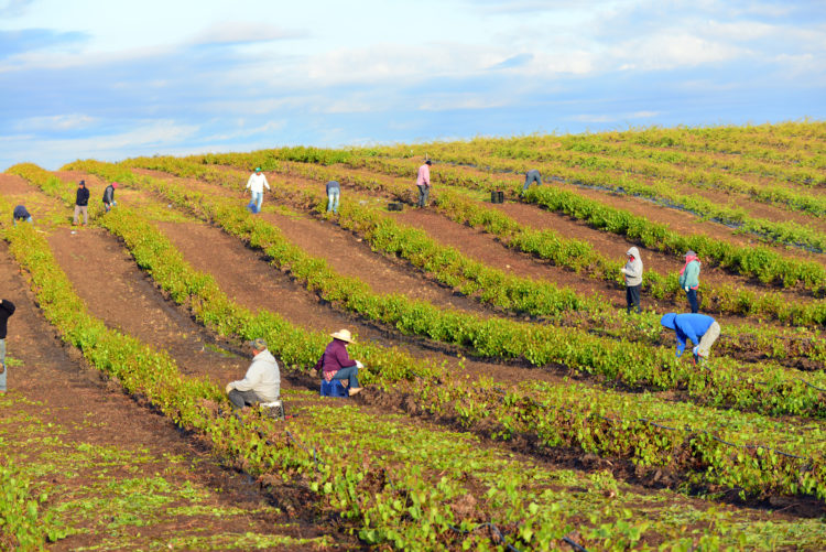 Moravia Wines in San Joaquin Valley
