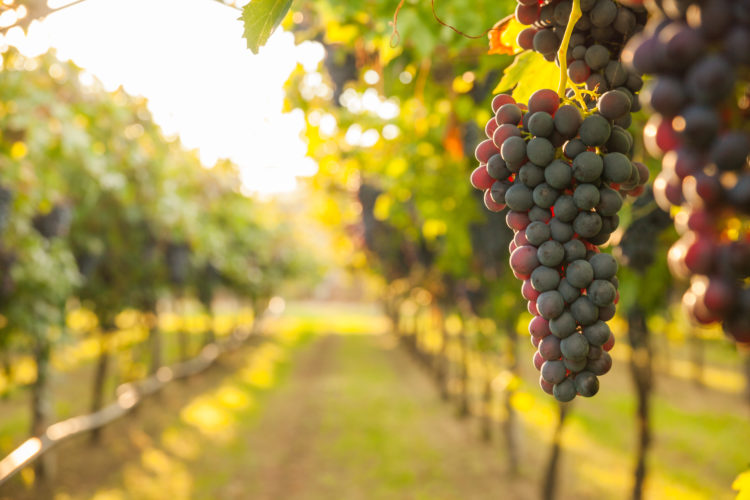 Habersham Winery