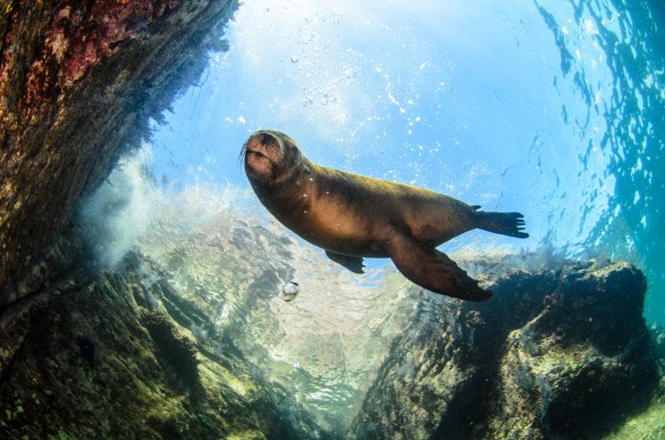 Seal Lions in Isla Espiritu Santo