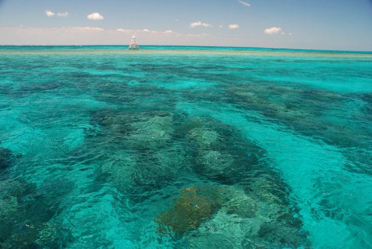 Swim or Dive at John Pennekamp Coral Reef State Park