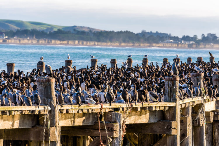 Blue Penguin Colony