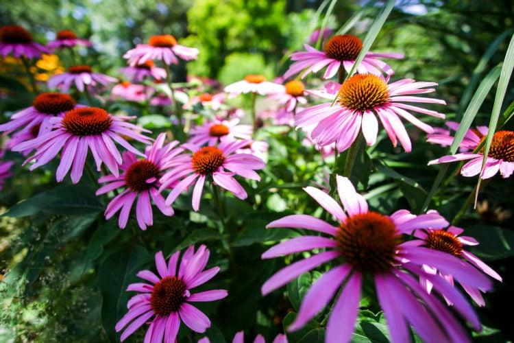 Cheyenne Botanic Gardens