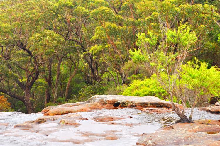 Dharawal National Park Indigenous Walking Tour