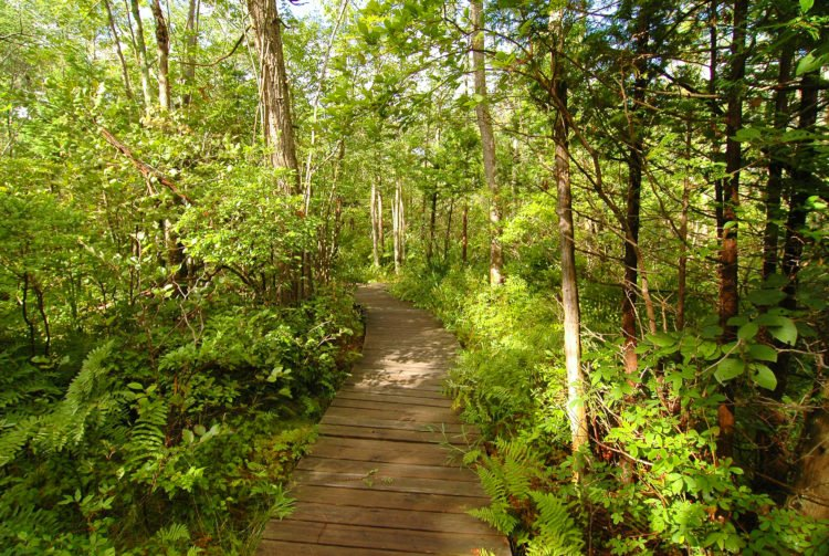 Beaver Lake Nature Center