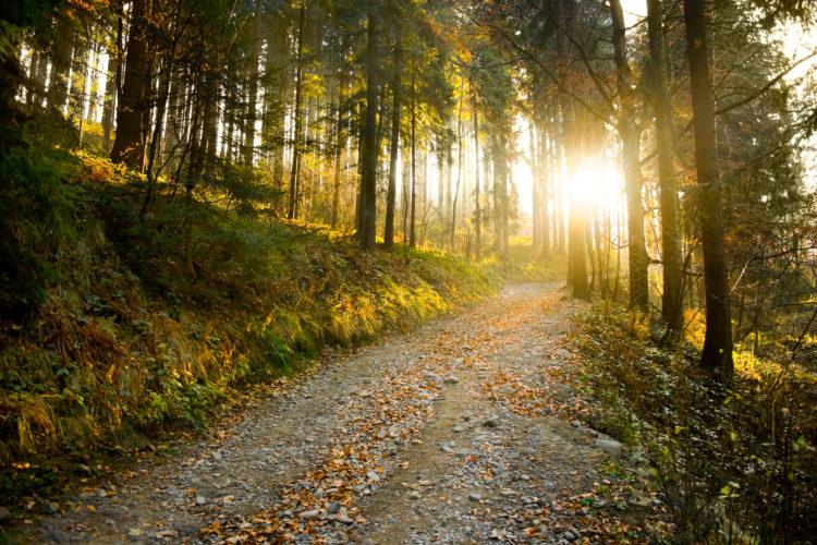 Shanty Hollow Lake Hiking Trail