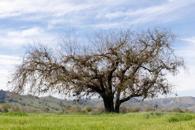Nature at Oak Openings Preserve