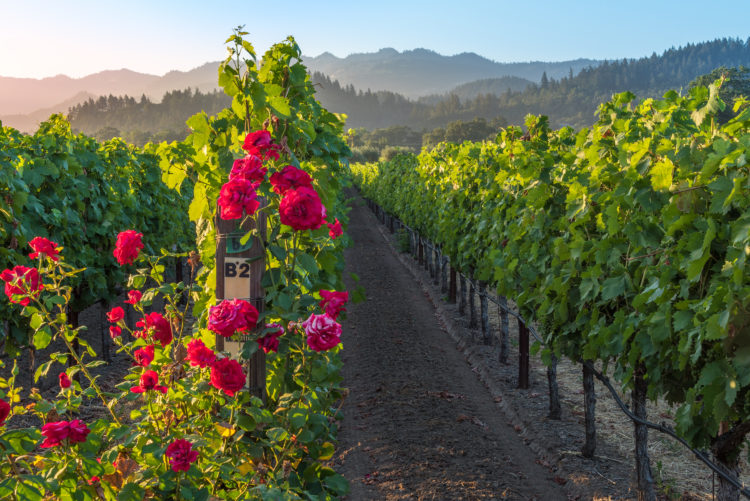 Wine Immersion Experience in St. Helena