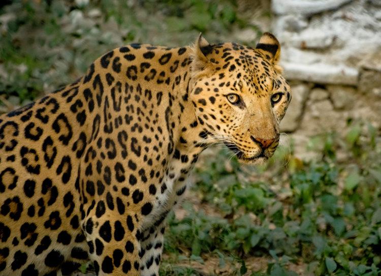 Jubilee Zoo