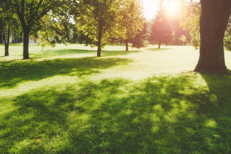 Merwyn Meadows Park