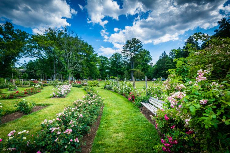 Elizabeth Park Rose Gardens