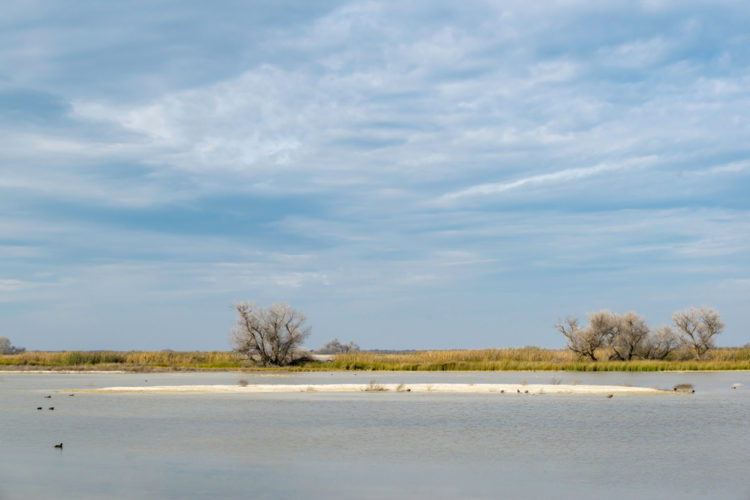 Kern National Wildlife Refuge