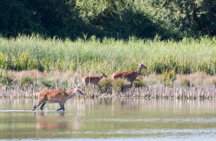 Lagoon Deer Park