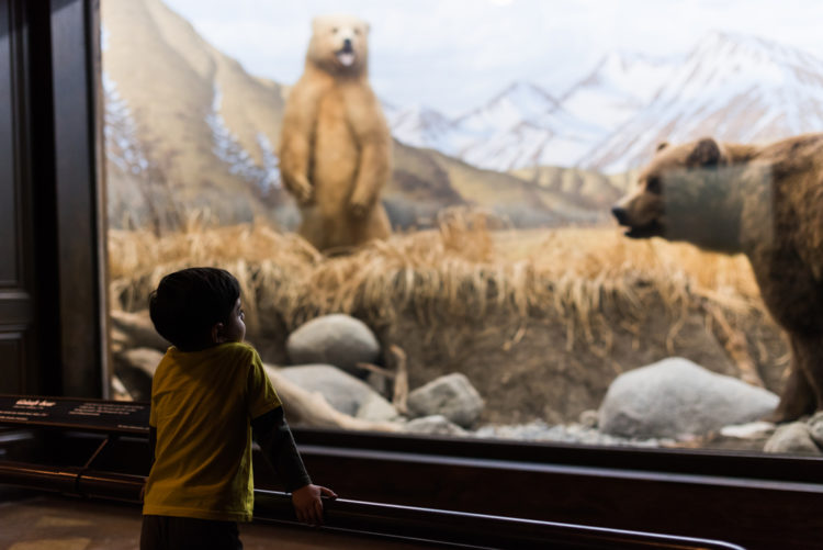 Buena Vista Museum of Natural History