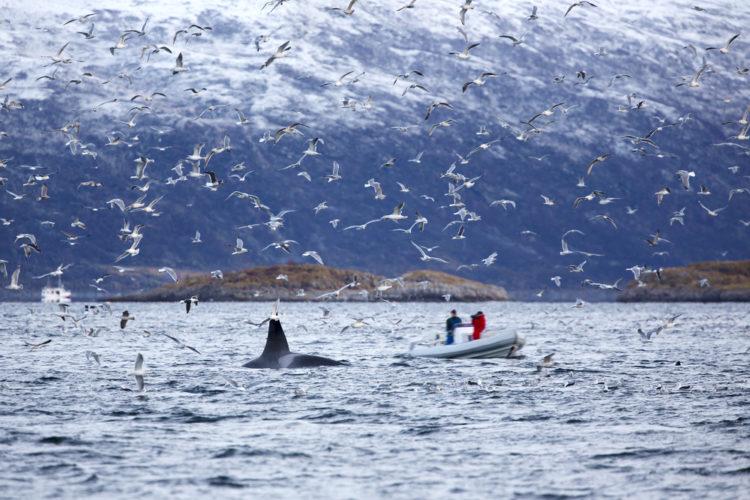 Arctic Boat Safari