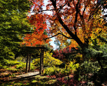 Luthy Botanical Garden
