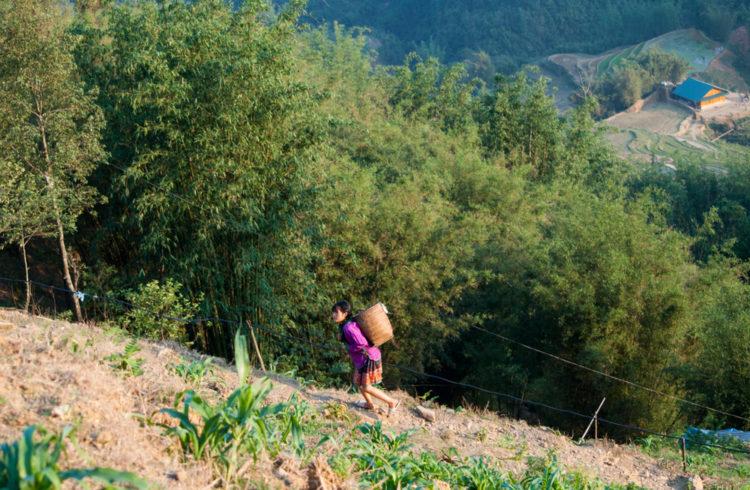 Sapa Bamboo Trail
