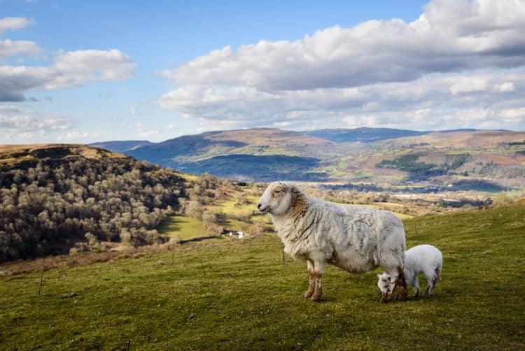 Lammas Ecovillage, Wales