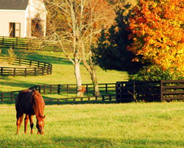 Duncan Park, Kentucky