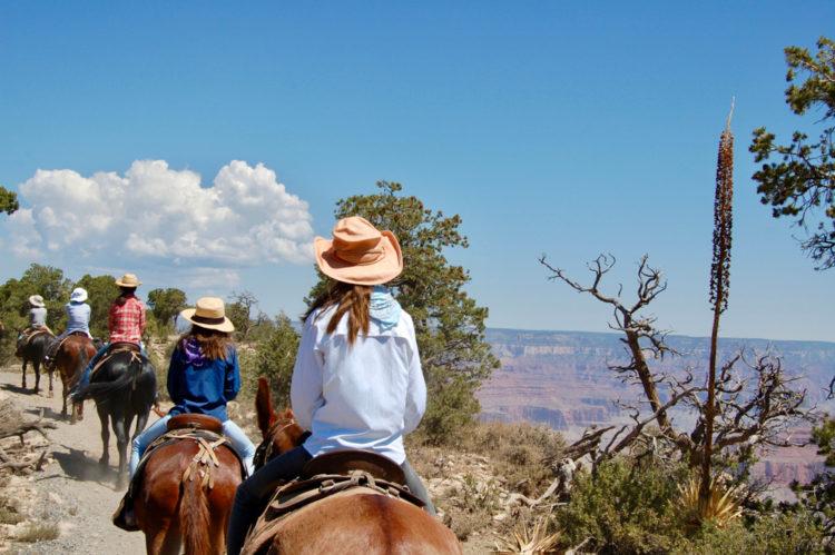 Grand Canyon by mule
