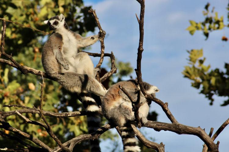 Animals at Safari West
