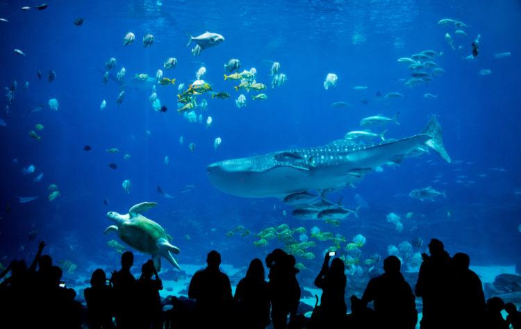 Enjoy a Day at Nantucket Aquarium
