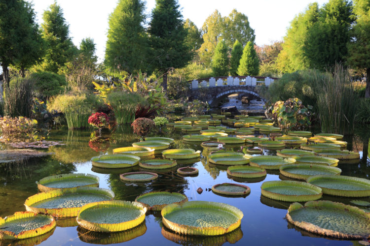 Stroll Around Dubuque Arboretum and Botanical Gardens