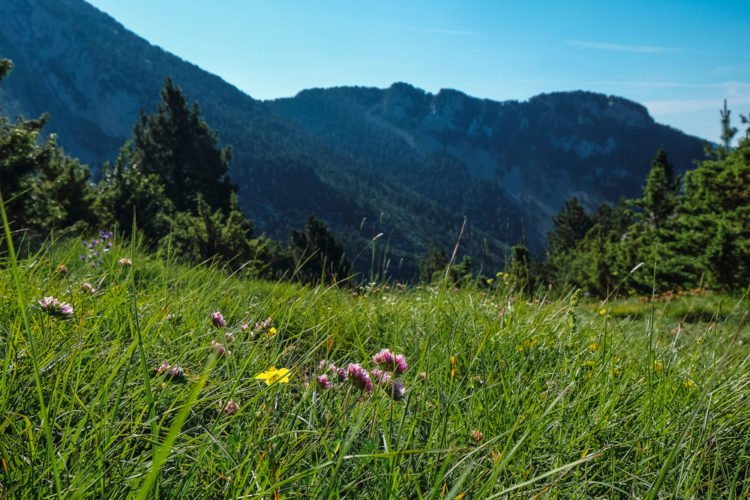 Get Close to Nature in Cady Hill Forest